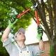 آموزش هرس درختان گردو و بالا بردن تاج آن ها