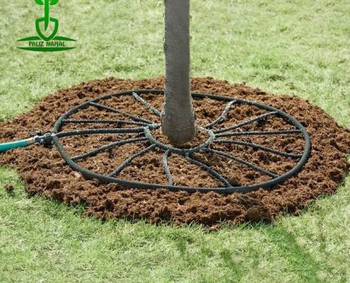 بهترین روش آبیاری درختان گردو
